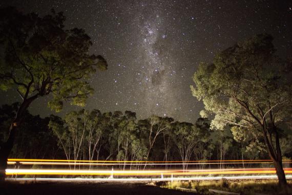 forest australia