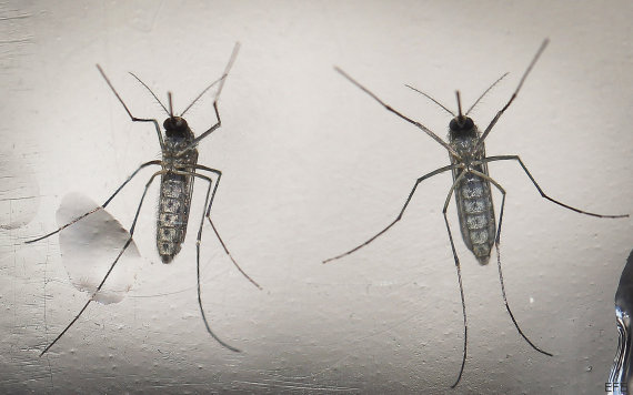 mosquito zika san salvador