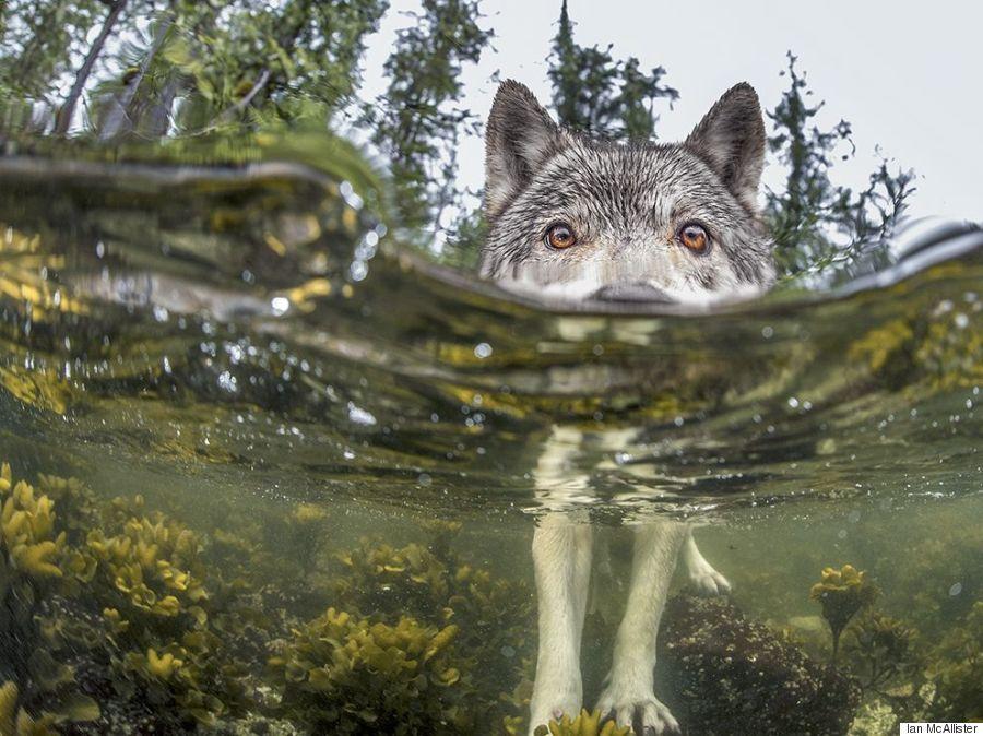 sea wolf bc