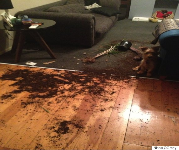 dog knocked over plant