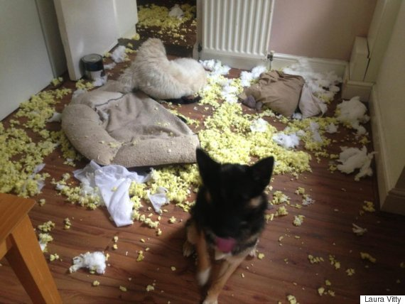 dog shredded pillow