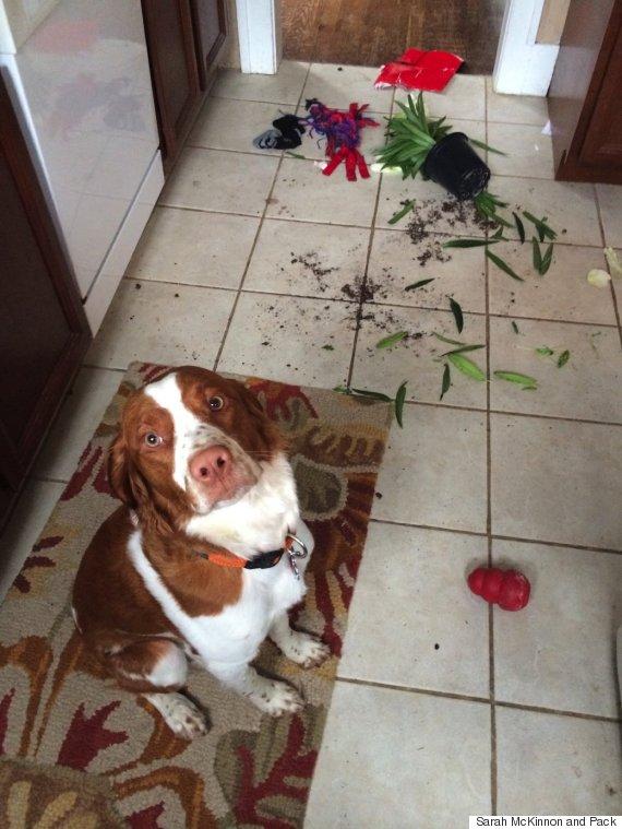 dog overturned plant