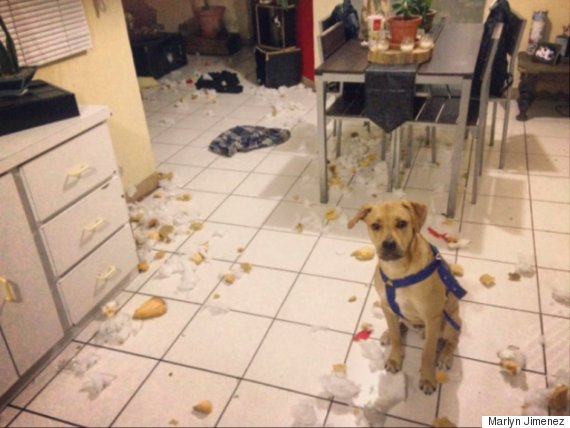 dog made mess in kitchen