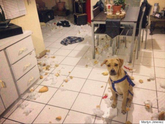 Lily S Kitchen Puppy