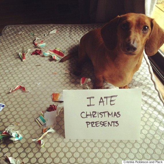 dog ate christmas presents