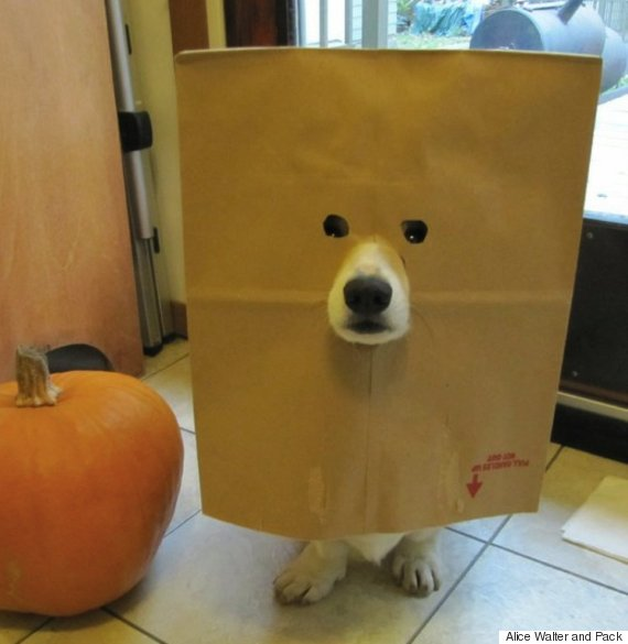 dog in grocery bag