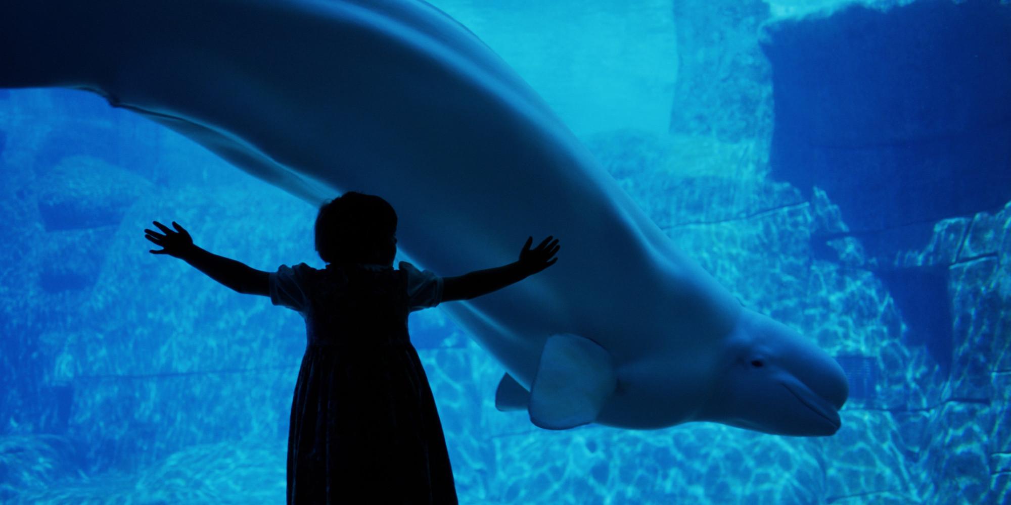 Fish aquarium vancouver -  Vancouver Aquarium Launches Lawsuit Over Critical Doentary