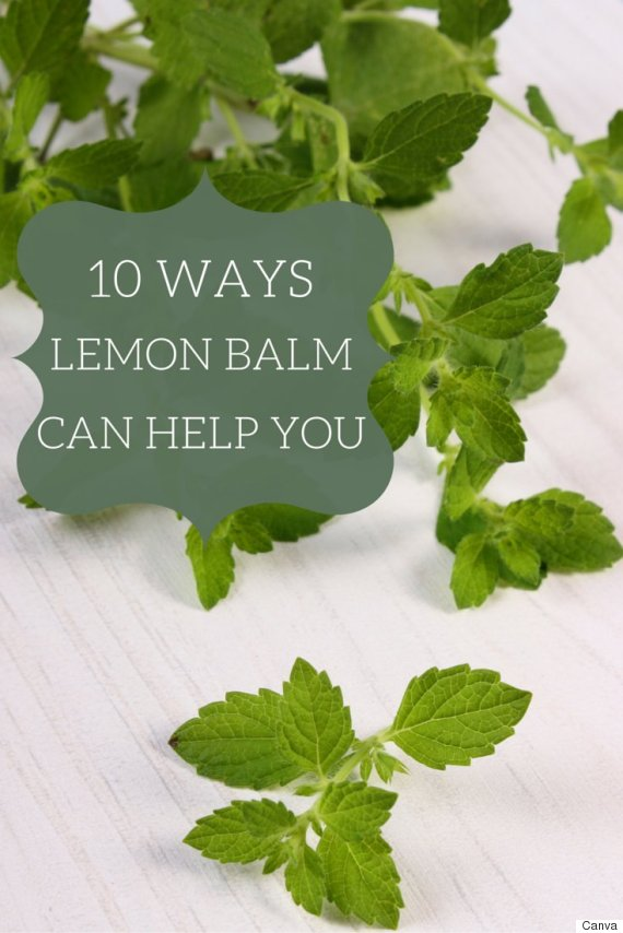 lemon balm pin
