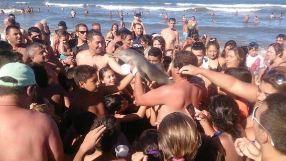 argentina beach dolphin dead