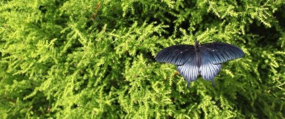 Papillons en libert au jardin botanique les chenilles for Papillons jardin botanique 2016