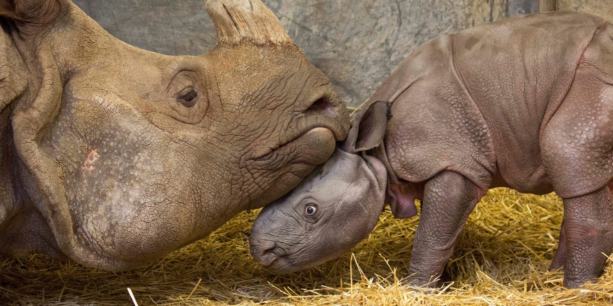 How much does a baby rhino weigh?