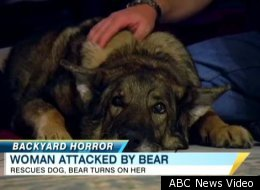 Woman Survives Bear Attack Saves Dog