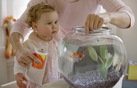 baby and goldfish