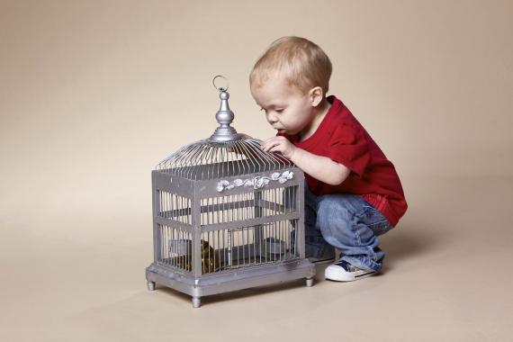 bird and toddler bird cage