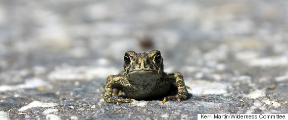 toads nakusp