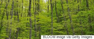 SHIMANE FOREST