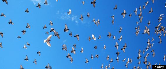 BIRDS WORRY