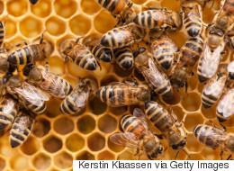 180 ruches et 5 millions d'abeilles volées: une arrestation