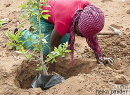 Baobab Ökologie: Starthilfe für Giganten