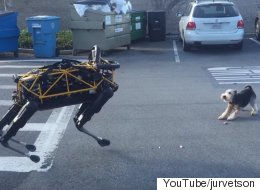 Watching Google's Robot Dog Play With A Real Dog Is Like Staring Into The Future