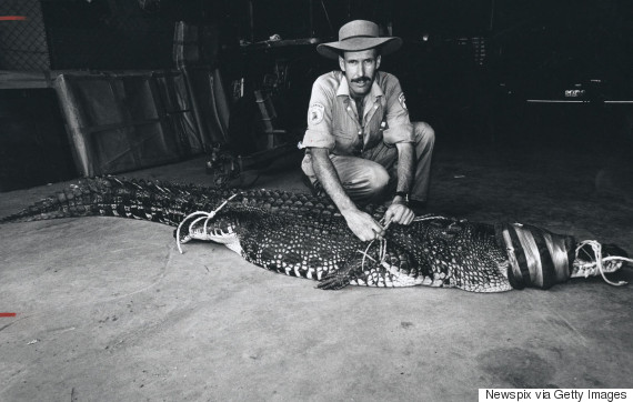 crocodile captured australia