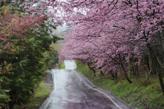 Spring blossom along country road | Pic: Getty Images