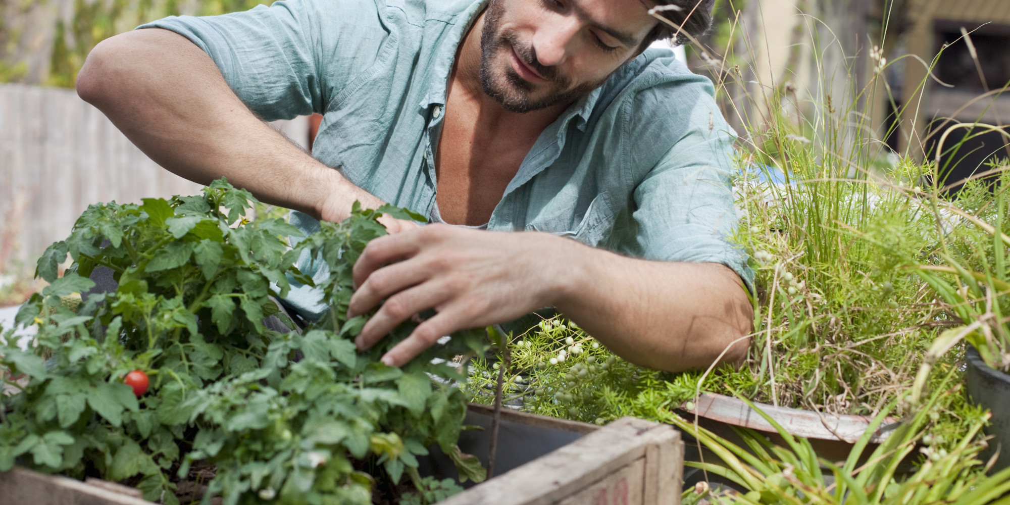 Beginners gardening gardening tips for beginners garden for Gardening advice