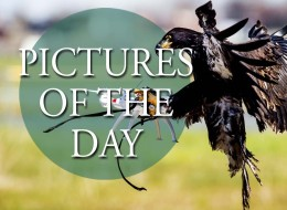 LIVE: Pictures Of The Day Wednesday 9th March