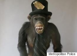 This Chimpanzee In A Top Hat And Tie Has Gone Missing