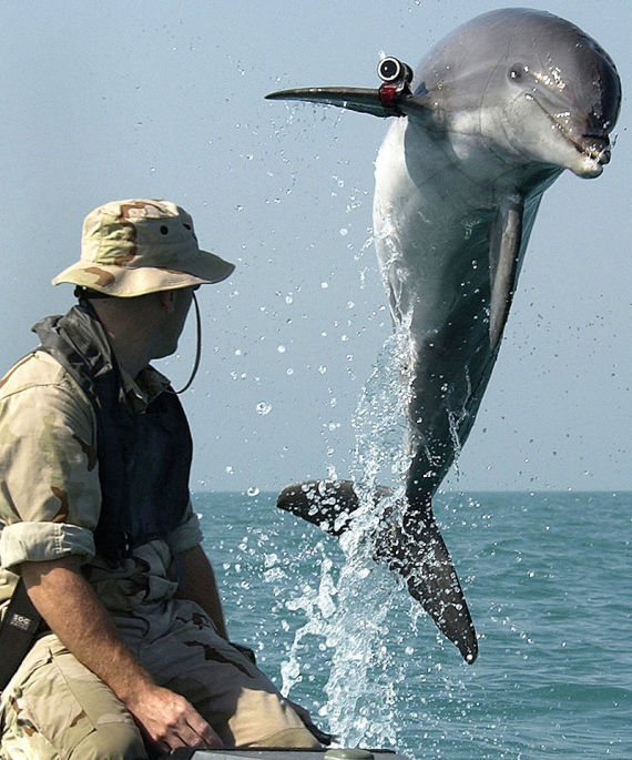 russia dolphins