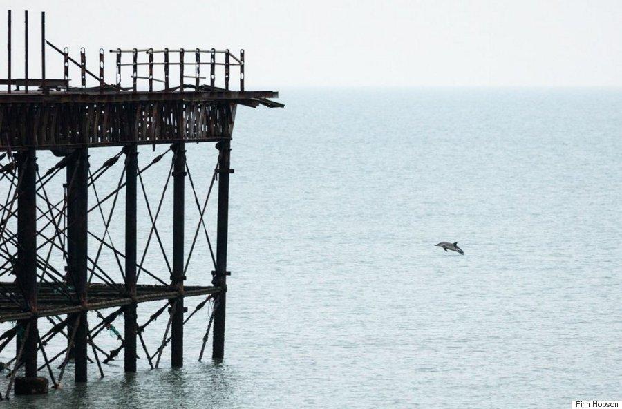 dolphin brighton