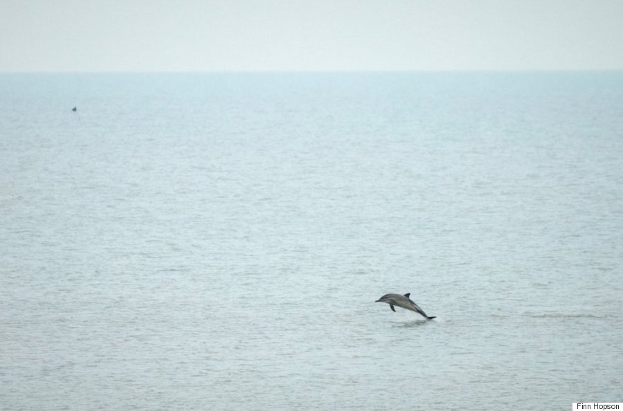 dolphin brighton pier