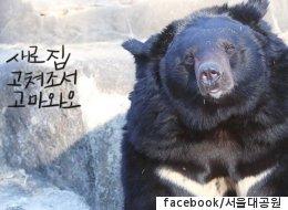 서울대공원 곰, 앞으로 '이런 곳'에서 생활하게 된다(전후 사진)
