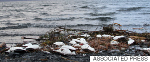 ARCTIC BIRDS DIE