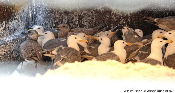 seagulls tofu vancouver