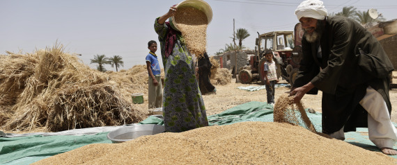 WHEAT IN EGYPT