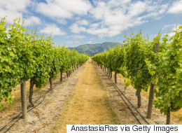 Celebrating The Summer Of Chardonnay