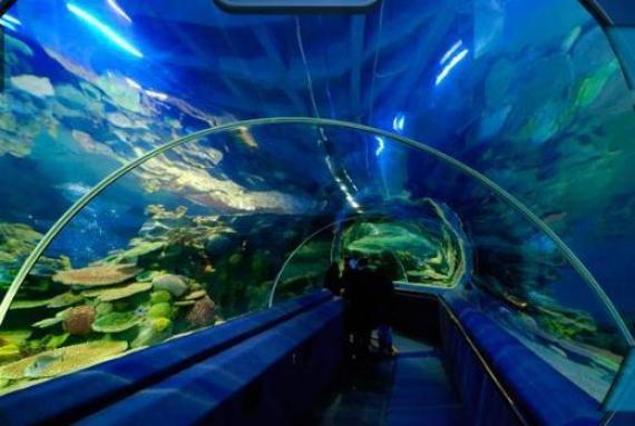 aquaryum