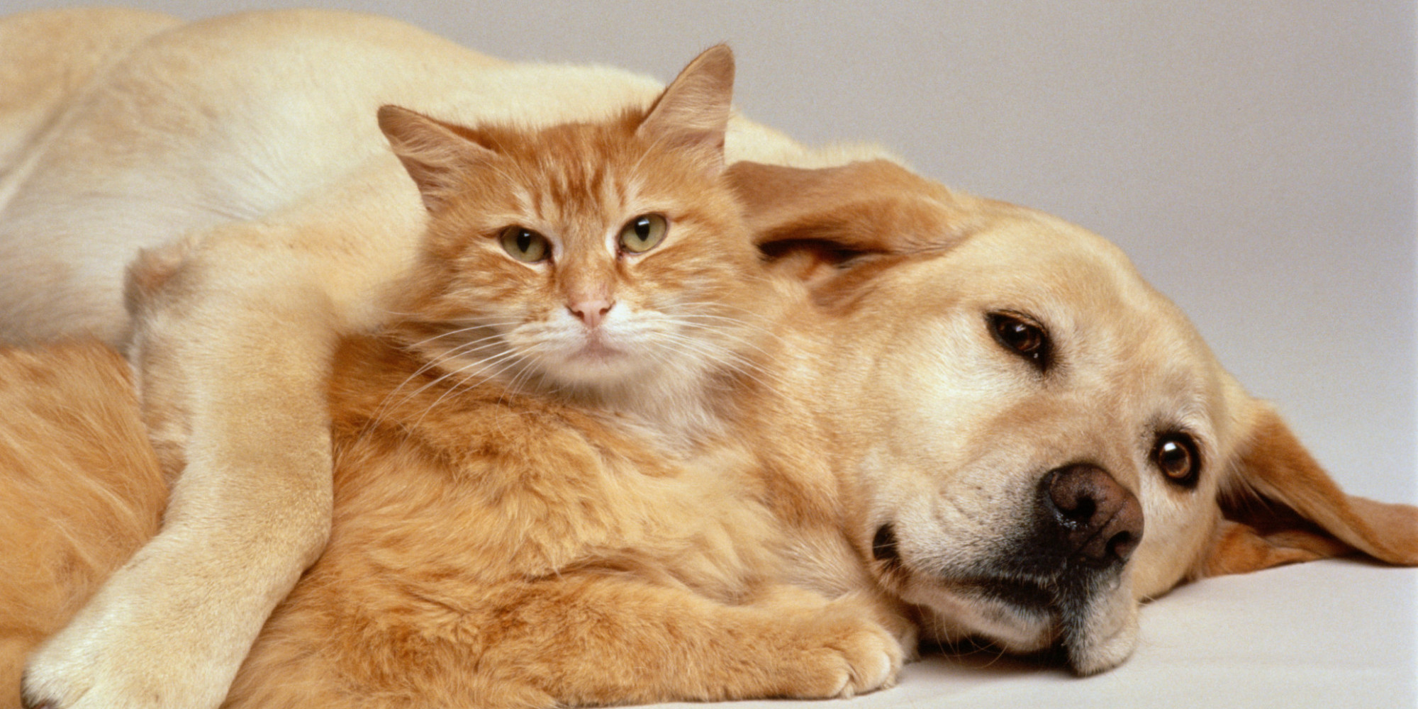 Study Finds Cat Owners to Be Complete Losers   HuffPost