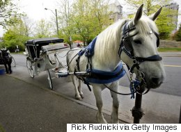 Group Petitions To Ban Horse-Drawn Carriages In Victoria