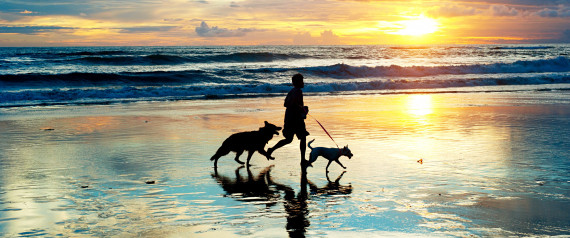 WALKING DOG HEALTH
