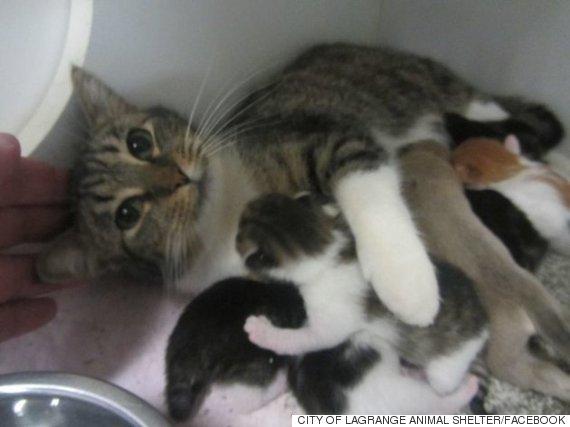 city of lagrange animal shelter