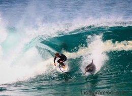Ce dauphin, invité surprise d'une session de surf