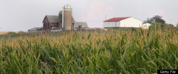 FARM CORN FIELD ETHANOL PRODUCTION