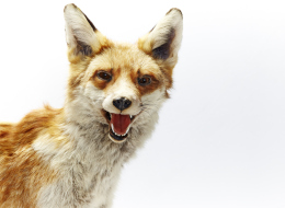 'Is Our Society Crazy Like A Fox, Or Just Plain Crazy?'