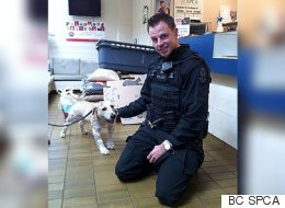 Vancouver Police Donate Overtime Pay To Help Rescued Puppies