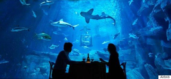 airbnb shark