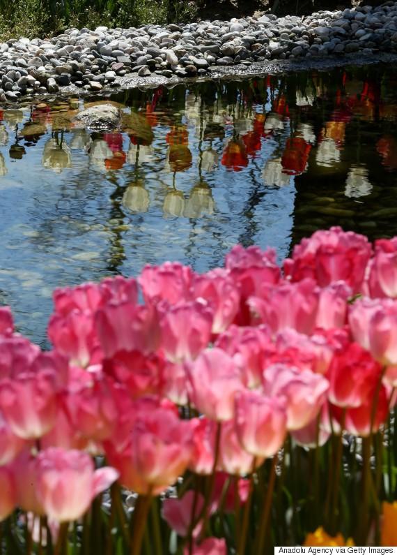 tulip istanbul