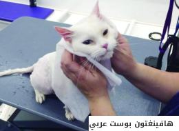 تعرّف على تجربة 4 سعوديات قررن خدمة الكلاب والقطط