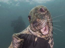 Ce phoque souriant a remporté le concours «Underwater Photography» (PHOTOS)